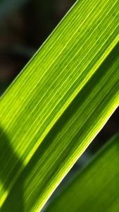 leaf light 2