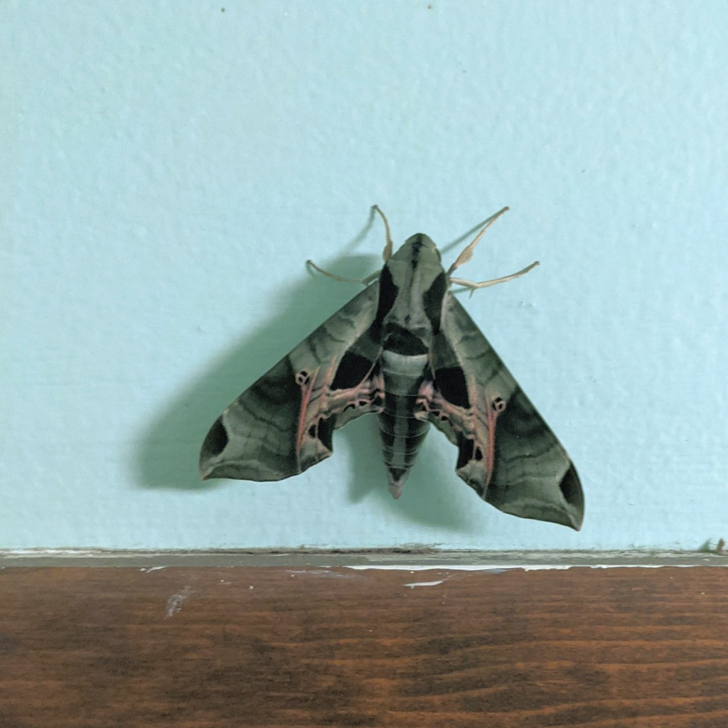 moth in the mudroom